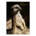 """Meerkat lindo """"paciencia"""" cualquier tarjeta de fel"""