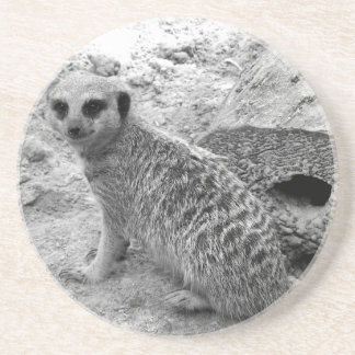 Meerkat looking at viewer photogarph picture coaster