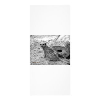 Meerkat looking at viewer photogarph picture rack card