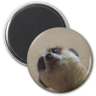 Meerkat Looking Dramatic Magnet