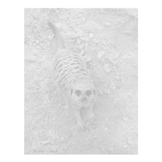 Meerkat looking up from ground photograph pic letterhead