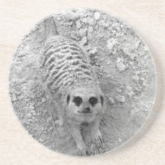 Meerkat looking up from ground photograph pic sandstone coaster