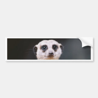 Meerkat Lookout Bumper sticker