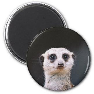 Meerkat Lookout Fridge Magnets