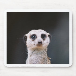 Meerkat Lookout Mouse Pad