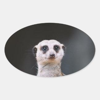Meerkat Lookout Oval Sticker