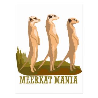 Meerkat Mania Postcard