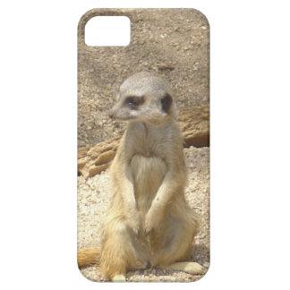 Meerkat maravilloso funda para iPhone SE/5/5s