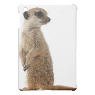Meerkat o Suricate - surica del Suricata