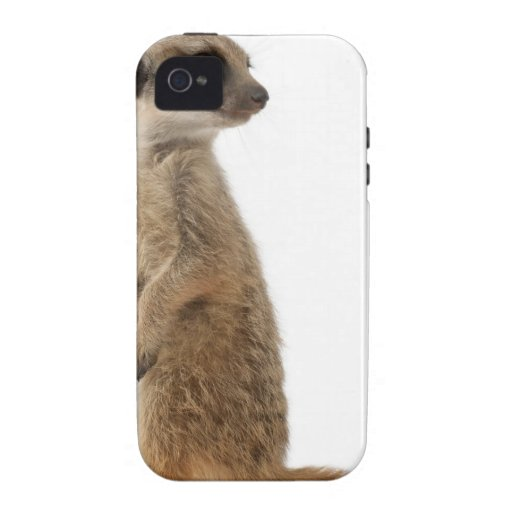 Meerkat o Suricate - suricatta del Suricata Funda Case-Mate Para iPhone 4