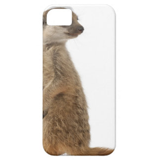 Meerkat o Suricate - suricatta del Suricata iPhone 5 Fundas