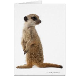 Meerkat o Suricate - suricatta del Suricata Tarjeta De Felicitación
