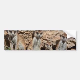 meerkat o suricate, suricatta Kalahari del Pegatina Para Auto