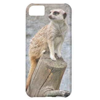 Meerkat on a Log iPhone 5C Case