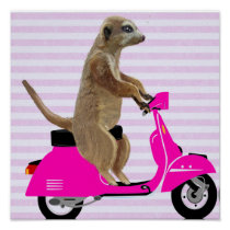 Meerkat on Pink Moped Poster