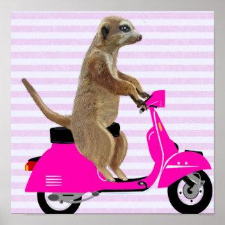 Meerkat on Pink Moped Poster