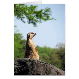 Meerkat on the Lookout Card