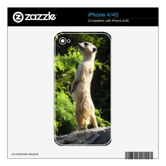 Meerkat- On The Watch Skin For The iPhone 4S