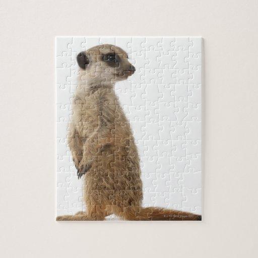 Meerkat or Suricate - Suricata suricatta Jigsaw Puzzle