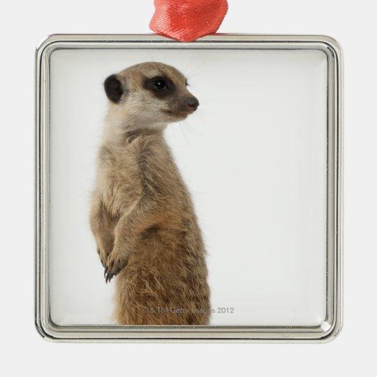 Meerkat or Suricate - Suricata suricatta Metal Ornament