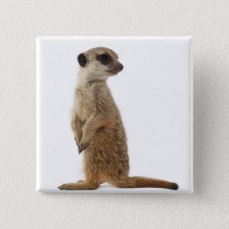 Meerkat or Suricate - Suricata suricatta Pinback Button