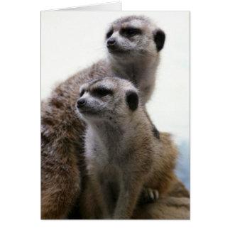 Meerkat Pair Greeting Card
