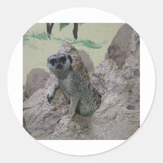 Meerkat Pegatinas Redondas