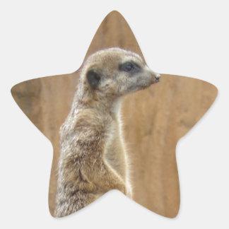 Meerkat Pegatina En Forma De Estrella