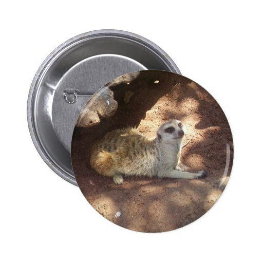Meerkat pensativo pin