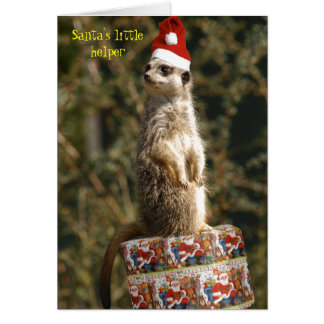 Meerkat, pequeña tarjeta del ayudante de Santa