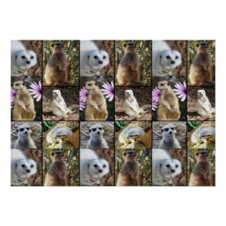Meerkat Photo Collage Value Wall Poster