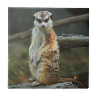 Meerkat Photo Small Square Tile