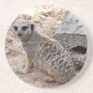 Meerkat photograph against log and sand coasters