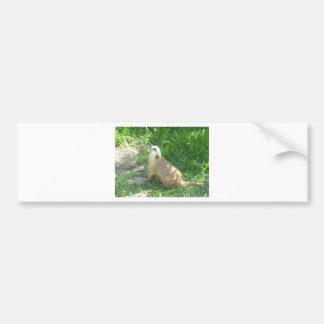 Meerkat pondering bumper sticker