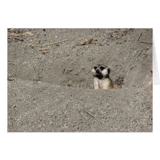 Meerkat popping out photograph card