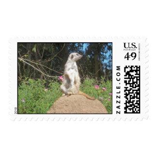 Meerkat Postage