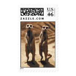 Meerkat postage stamps
