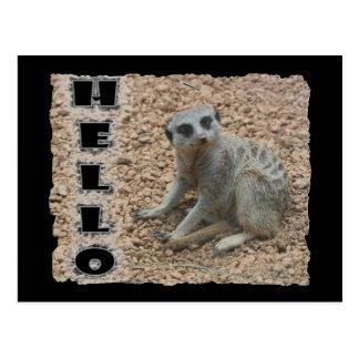 Meerkat Postales