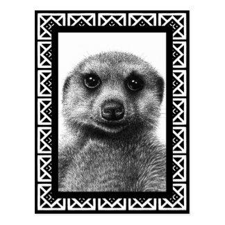 Meerkat Postcard