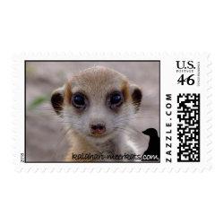 Meerkat Pup Postage stamp