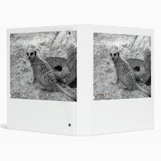 Meerkat que mira la imagen del photogarph del espe