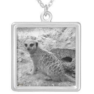 Meerkat que mira la imagen del photogarph del espe colgante cuadrado