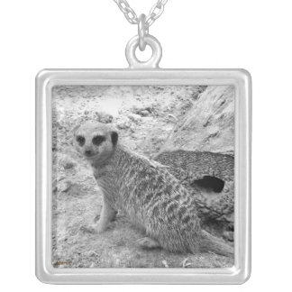 Meerkat que mira la imagen del photogarph del espe collares