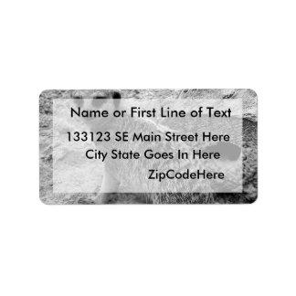 Meerkat que mira la imagen del photogarph del espe etiquetas de dirección