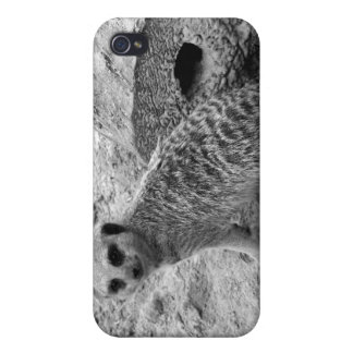 Meerkat que mira la imagen del photogarph del espe iPhone 4 funda
