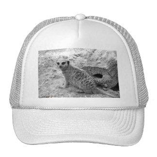 Meerkat que mira la imagen del photogarph del espe gorros bordados