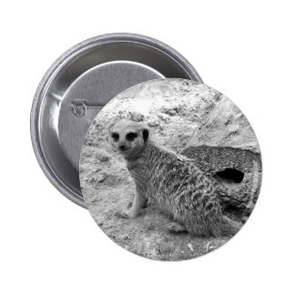 Meerkat que mira la imagen del photogarph del espe pin redondo de 2 pulgadas