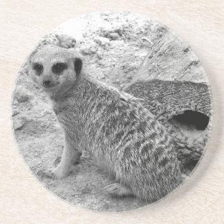 Meerkat que mira la imagen del photogarph del espe posavasos para bebidas