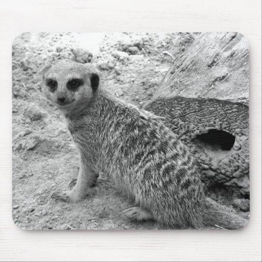 Meerkat que mira la imagen del photogarph del espe tapetes de ratón