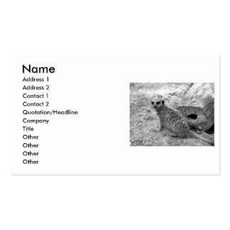 Meerkat que mira la imagen del photogarph del espe tarjeta de visita